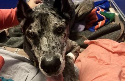 Southern Regional Veterinary Specialists - Dothan, AL