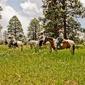 Majestic Dude Ranch - Mancos, CO