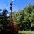 Olivias Tree Service
