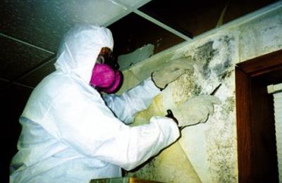 Greenstar Pro Carpet Cleaning Schaumburg - Schaumburg, IL