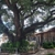 Legendary Trees