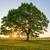 Ace Tree Surgery Inc