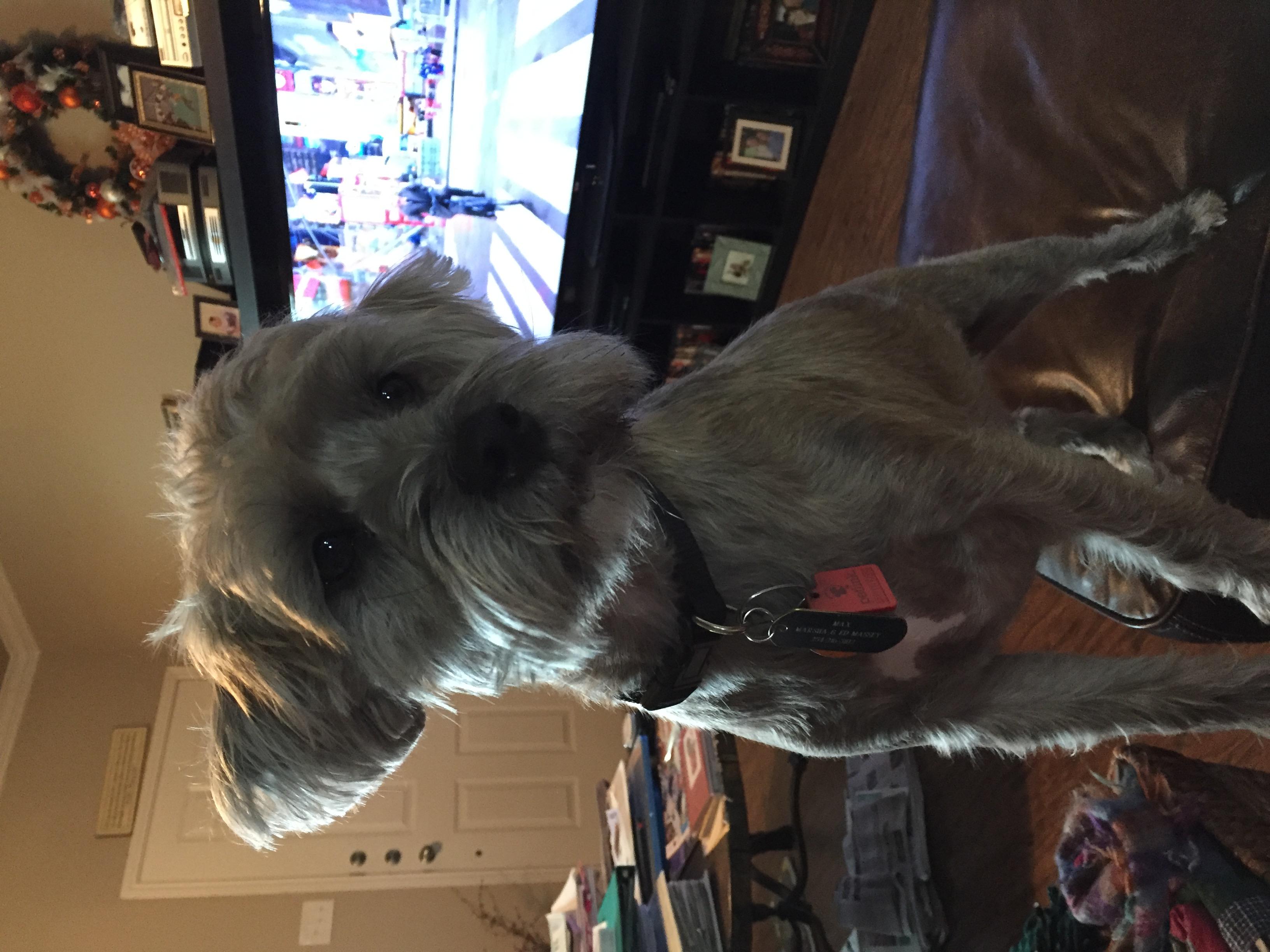 Bella S Pet Grooming 1222 Fort Worth Hwy Ste B