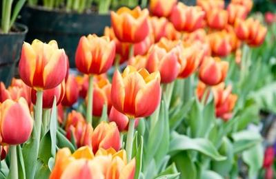 garden centers in ma. mahoney\u0027s garden centers - east falmouth, ma in ma e