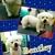 Paw Metto Pooches Pet Salon
