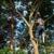 Lafayette Tree Services