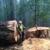 Arnold Bros Tree Services