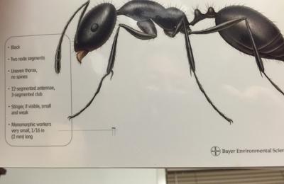 Amtech Personalized Pest Management - Brookfield, CT