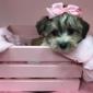 Furry Babies Inc. - Joliet, IL
