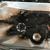 Crest Auto Truck & Equip Parts