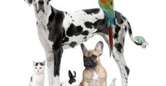 Riverview Veterinary Hospital - Atlanta, GA