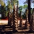 Greenville Landscaping Source