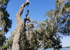 Sansoms Tree Service - Mulberry, FL
