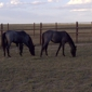 Chinook Winds Riding Stable, LLC - Calhan, CO