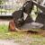 Iron Root Tree Service Inc