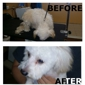 Lemoore Dog Grooming - Lemoore, CA