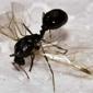 Encino Pest Control - San Antonio, TX