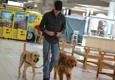Ultra Obedience Dog Training - Loxahatchee, FL