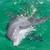 Wild Dolphin Tours