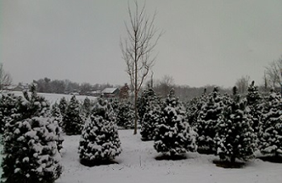 Kovalic's Christmas Tree Farm 487 Ecton