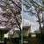 Charleston Stump Stompers & Tree Service