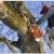 Mr. Greenjeans Inc Tree Surgeons & Landscape Design