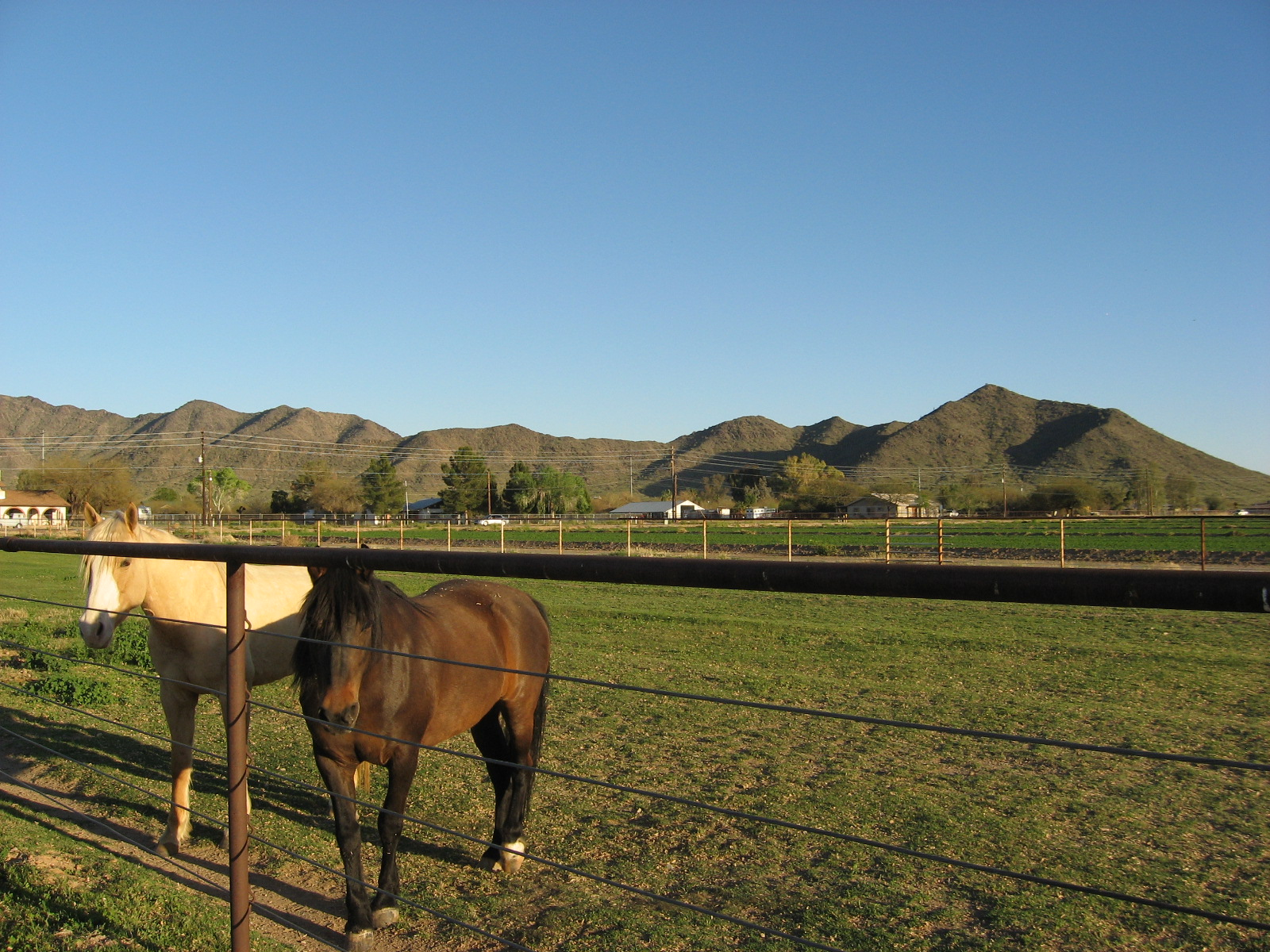 buena vista ranch horse boarding laveen az closed yp com