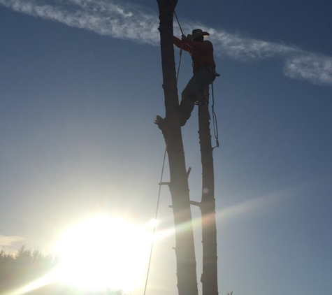 Chuy's Tree Service - Lorena, TX