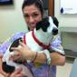 Lake Ray Hubbard Emergency Pet Care Center - Mesquite, TX