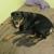 Companion Animal Clinic Of Gainesville PC