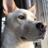 Rockhill Veterinary Associates